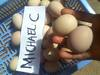 Fertile Parrot Eggs and Hatching Table Eggs For Sale