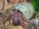 B&L Enterprises: Buyer of: coconut crabs, exotic animals insects from around the world, hermit crab foods, hermit crabs, land hermit crabs, live tarantulas all live insects from india, live crabs, live tropical fish reptiles, sea shells.