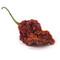 Anurag enterprise: Seller of: bhut jalakia, ghost chilli.