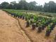 Cocoa&Coffee LTD: Seller of: cocoa, coffee, grapes, oranges, palm, tea.