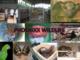 Phoenixx Wildlife: Seller of: macaws, snakes, turtles, toucans, tarantulas, small and medium sizes mammals, parrots, monkeys, lizards. Buyer of: mammals, birds, reptiles.
