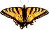 Eastern Monarch Group,LLC: Seller of: sheepskin, cowhide.