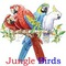 Jungle Birds: Seller of: bulbul, doves, livestock, parakeets, peacock, pheasant, pigeons, wild birds. Buyer of: budgerigar, cockatiel, java finches, livestock, lovebirds, finches, parrots, wild finches, zebra finches.