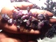 S&M Gems.: Seller of: blue sapphire, emerald, ruby, tourmaline, jade.