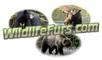 Darrell's Taxidermy: Seller of: bear skin rugs, wolf rugs, moose head mounts, bear heads, wolf head mounts, taxidermy rugs, animal skin rugs, wildlife rugs, real fur rugs.
