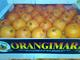 Orangina Export: Regular Seller, Supplier of: export, fruit, orange, lemon, vegetables, clementines, peppers, tomatoes.
