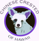 Chinese Crested Dogs of Hawaii DBA: Seller of: dogs, supplies, foods, training, stud service, show dogs, pet dogs, dog medications, education. Buyer of: supplies, medications, food, books, leather goods, electronic products, kennel products, shipping materials, training aids.