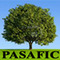 Pasafic Agro Industries: Seller of: plant growth regulator, soil conditione, bio fertilizer optimizer, organic fertilizer, bio feed supplement, organic humic acid, poultry and cattle feed supplement, fish food, fish firming product.