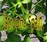 Jatropha Spain: Seller of: oil, vegetal, investing, plantation, morocco, biodiesel, biomass, jatropha, nonnourishing. Buyer of: oil, plantation, investing, morocco, biodiesel, biomass, jatropha, nonnourishing.