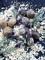 Sarl Punica: Seller of: live wild snails, snail extract, helix pomatia, snail caviar, helix aspersa maxima et muller.