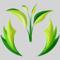 Pezoona: Seller of: organic assam orthodox tea, assam green tea, organic assam ctc tea, assam ctc tea, green tea extract.