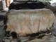 UAB Ruslta: Seller of: raw wet salted, cow buffalo calf, skins hides.