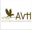 AVH Exotic Birds and Breeding Farm: Seller of: birds, medicines, food. Buyer of: pigeons, finches, canary, parrots, medicines, seeds.