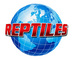 Reptiles Planet & Pet Studio: Regular Seller, Supplier of: live tortoise, live birds, live mammals, live reptiles.