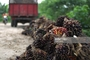 Adams Smith Palm Oil Industry: Seller of: apple, coconut, galick, palm oil, pepper, pineapplewe, plantain, snails, vegetable.
