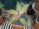TC garden: Seller of: lucky bamboo, orchid, aglaonemas.