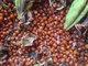 M K Herbal Seeds Exports & Imports: Seller of: spirulina, cucumber, gloria superba, herbal hairwashpowder, herbals, kalihariseeds, maize, neem seeds, pepper. Buyer of: cell phone, laptop.