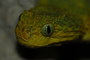 All Reptiles Trading Co.: Seller of: snakes, monitor lizards, frogs, venomous, invertebrates, turtles, lizards, geckos, tortoises. Buyer of: snakes, frogs, turtles, venomous, chameleons, monitors, spiders, centipedes, exotics.