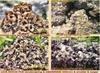 Natural pebbles & cobbles