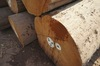 Star grade Teak Logs/Sawn timber