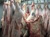 Halal Fresh Frozen Meat