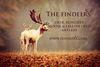 Deer, Reindeer, Fallow Deer & Moose Antlers