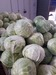 Cabbage - Fresh White Cabbage