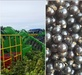 Frozen organic blackcurrant