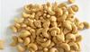 Vietnamese Cashew Nuts & Kernels