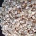 White Corn, White Maize