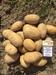 Fresh Potatoes from Turkey