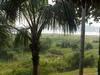 Trips to the Brazilian Amazon
