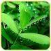 Spray Dried Fruti&Vegetable Powders