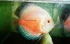 Live Tropical Fish & Ornamental Fish