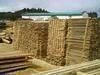 Pine Wood Lumbers/Logs/Pallets Elements