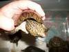 Loggerhead Musk Turtles and more