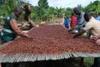 Cashew/cocoa/coffee