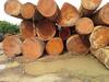 Padouk Timber Wood Log