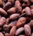 Raw Cocoa seed