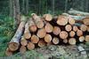 Logs And Lumbers