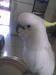Live birds animals