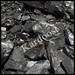 Gilsonite, Chrome ore, Bentonite, locorice