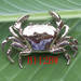 B109BW Bio-jewelry brooch, Blockbuster