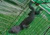 Tokay Gecko, Scorpions, Tortoises, Snakes, Parrots, live Birds, African Grey