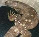 Reptiles, Amphibians, Insects, Arachnid, Birds and Mammals