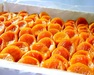 Dried apricots 100% natural product from Uzbekistan