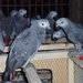 Live Birds, Live Parrots, Live Tortoises, Reptiles For Sale