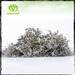 Organic finest keep fit tea leaves famous Moyeam herbal tea