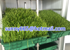 Animal Hydroponic fodder machine
