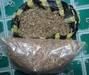 Botanical Products